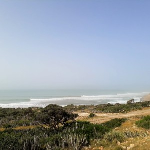 camels - surf maroc - swell