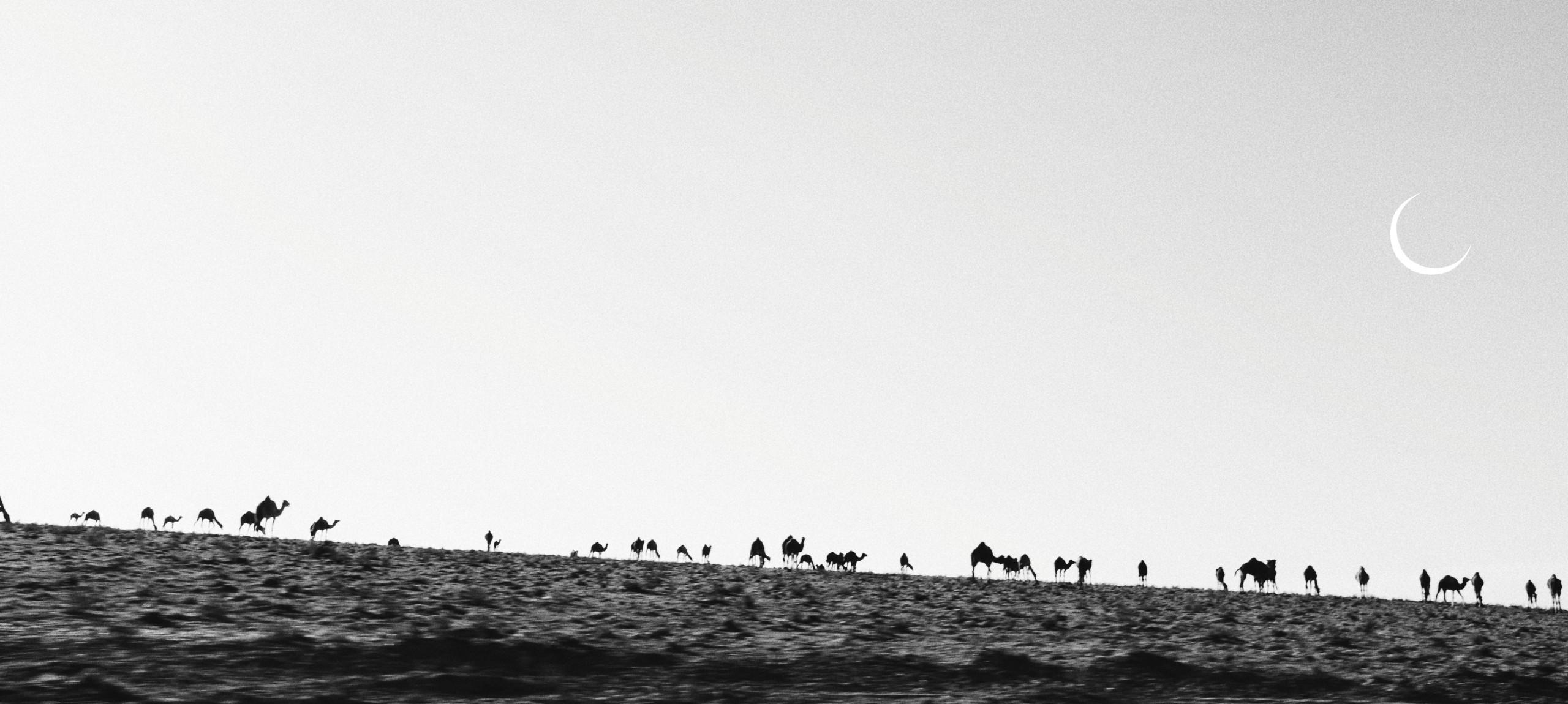 ramadan camels surf maroc
